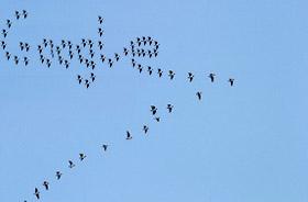 google-of-geese.jpg
