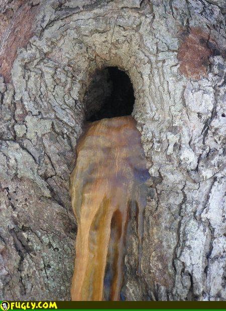 tree-poo.jpg