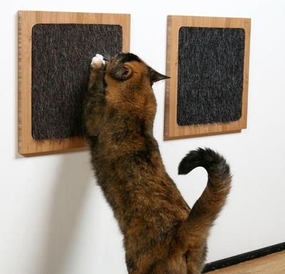 itch-cat.jpg
