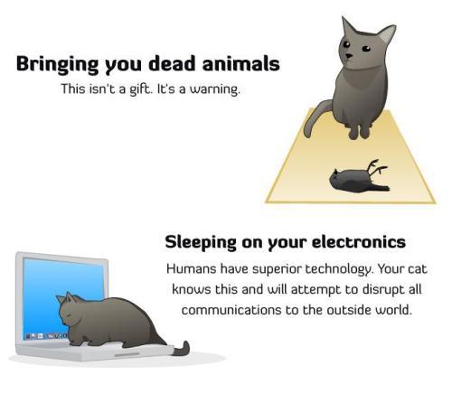 catskillingmeslowly